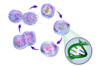 Rūgštus sveikatos prieskonis: Kraujo reakcija į pH. Vėžiniai susirgimai. (audio)